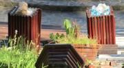 Bucegi, flori ,fluturi, lacuri, drumeție, Bușteni și Valea Cerbului