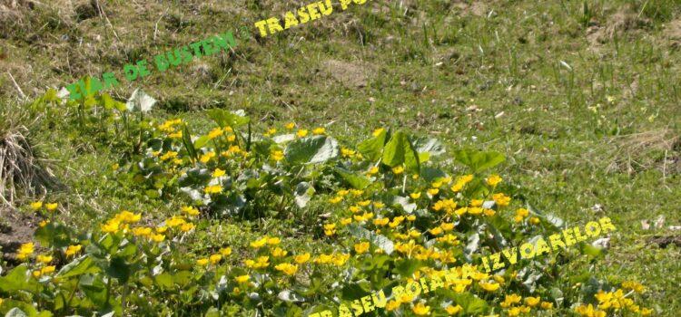 Flora ornamentala din Valea Prahovei
