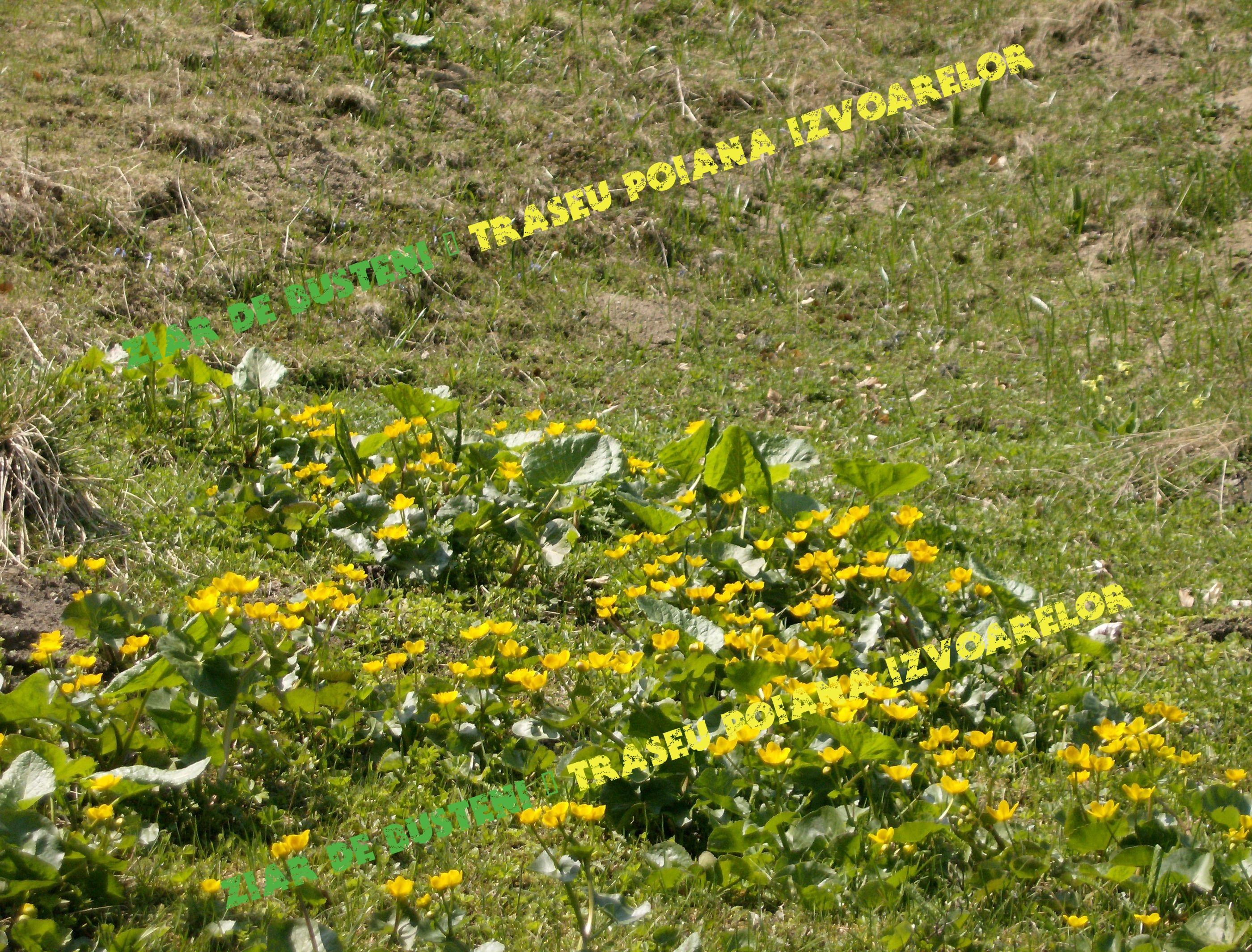 peisaje-florale-5