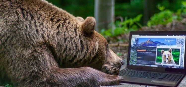 Dă natura mai tare, urșii in pericol