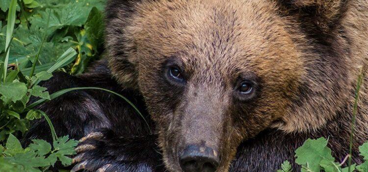Subiectul zilei – Ursul și Rețete și Sfaturi ecologiste