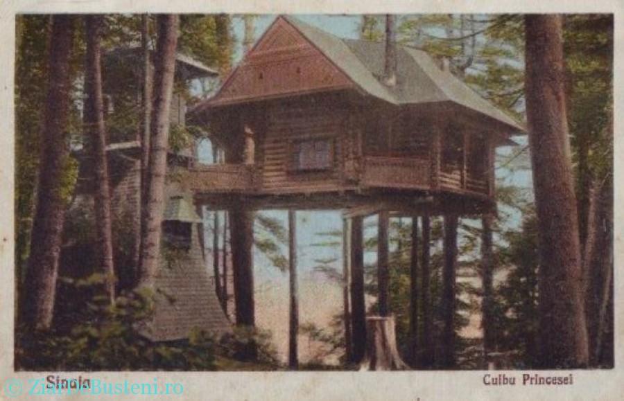 casa din copac 2