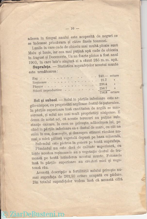 MONOGRAFIE BUSTENI 1906_0008
