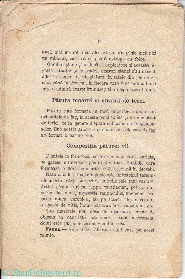 MONOGRAFIE-BUSTENI-1906_0012