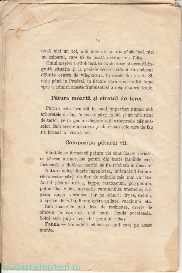 MONOGRAFIE BUSTENI 1906_0012