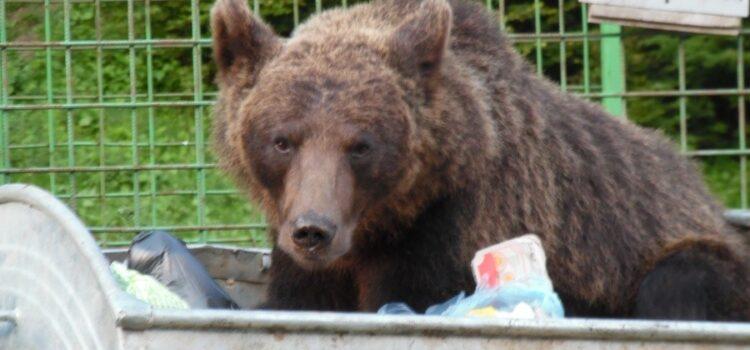 Printre urși in Valea Cerbului și in Bușteni