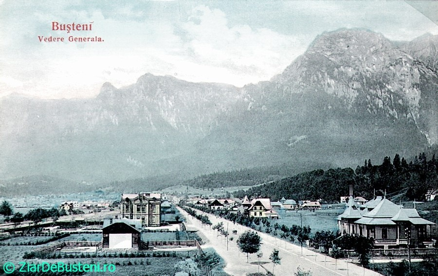 0121vedere-generala-trestia