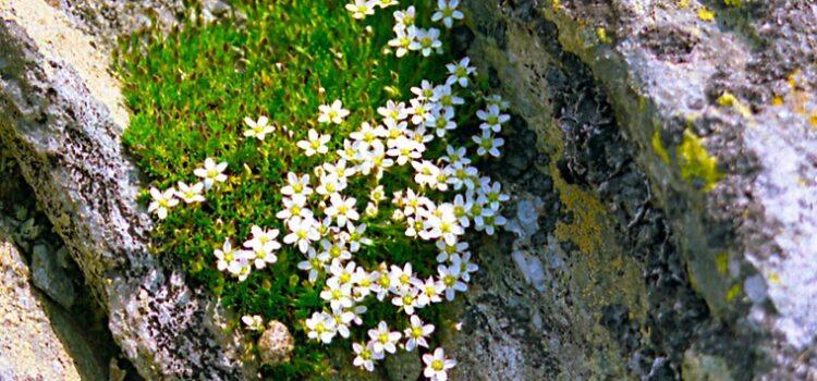 Flora montană ( update Fără politică ).