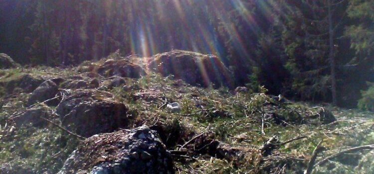 O zi in Poarta Bucegilor – Cascada Urlătoarea